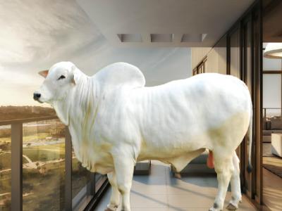 Crise da carne: saiba como criar um boi dentro do apartamento